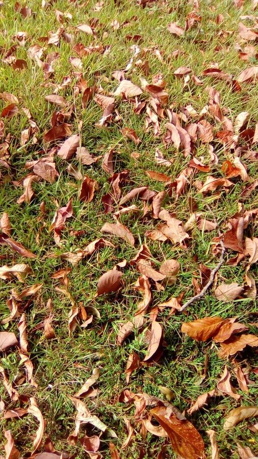 Feuilles sur la pelouse photographie stock libre de droits