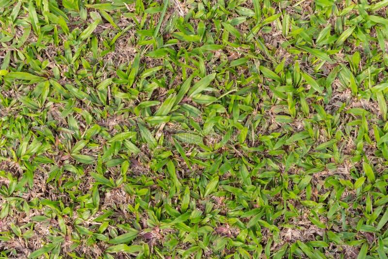 Feuilles sur la pelouse photos libres de droits