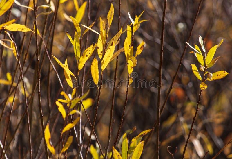 Feuilles sur les branches d'un arbre en automne image libre de droits