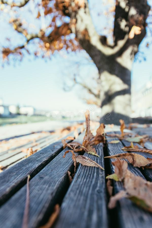 Feuilles sur un banc de parc, ciel bleu, automne photo libre de droits