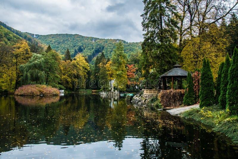 Feuilles sur un lac photo stock