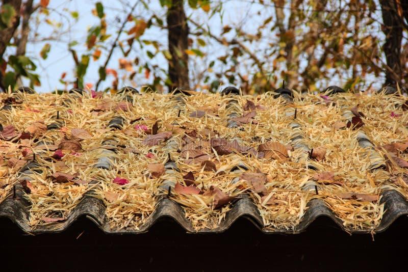 feuilles sur un toit photo libre de droits