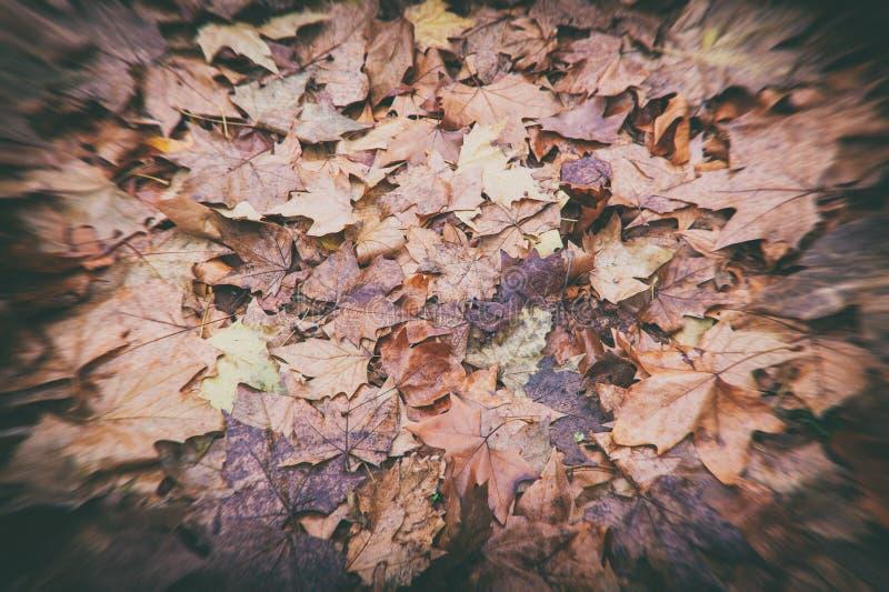 Feuilles tombées désaturées humides de Brown photographie stock