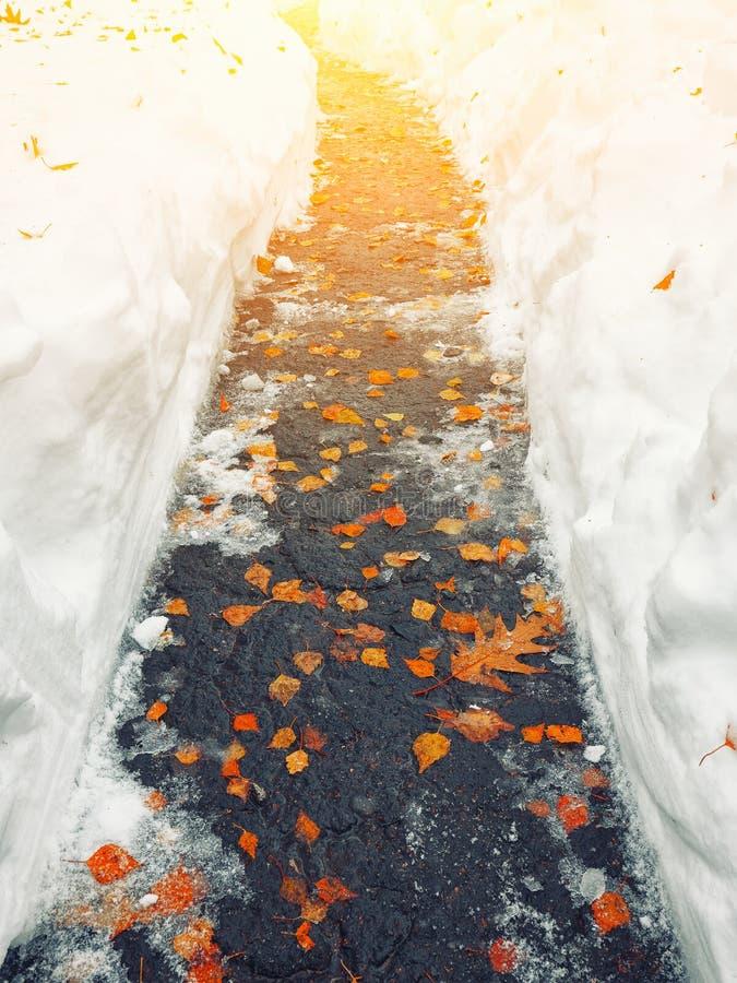 Feuilles tombées d'orange couvertes de neige se trouvant sur le piste pour piétons photo stock