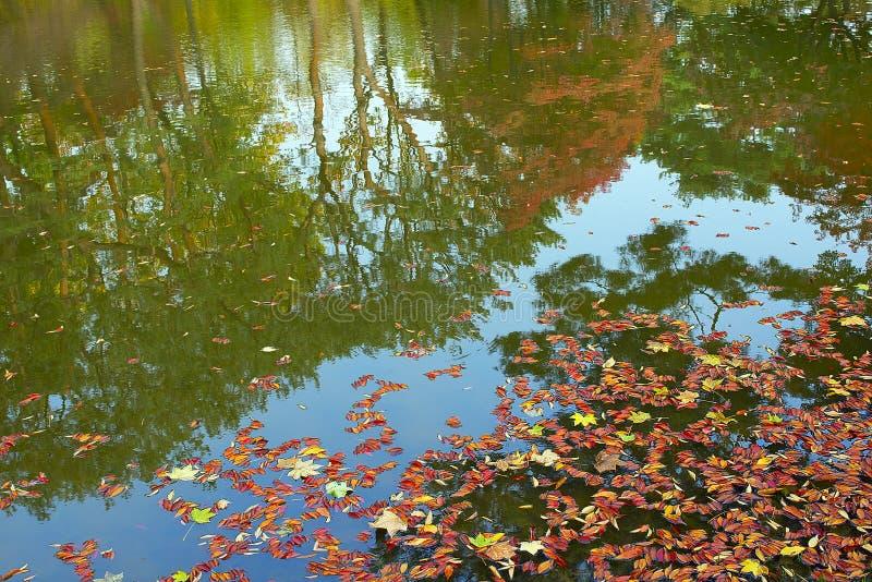 Feuilles tombées dans un étang avec des réflexions image libre de droits