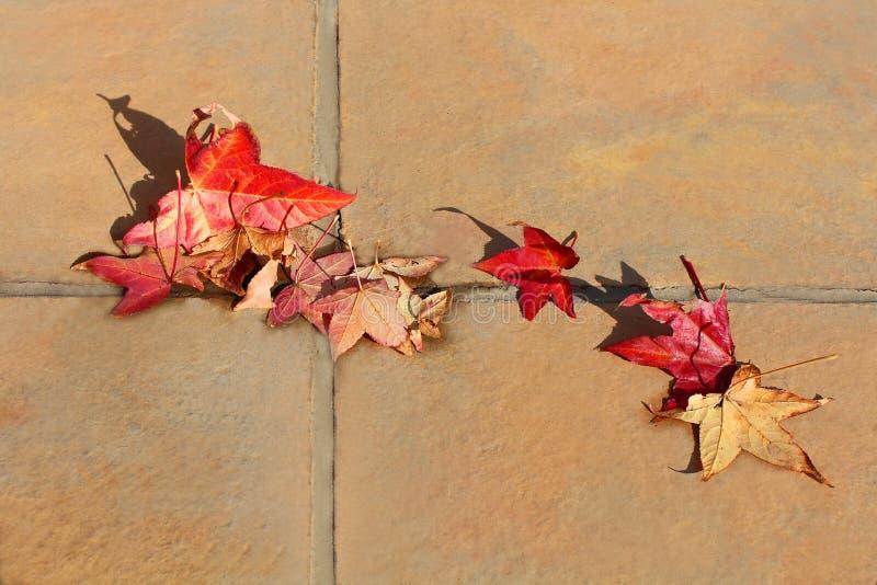 Feuilles tombées de rouge sur le plancher Motif d'automne photo libre de droits