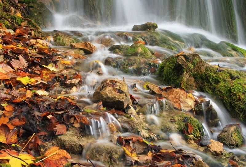 Feuilles tombées et pierres moussues à une cascade photo libre de droits