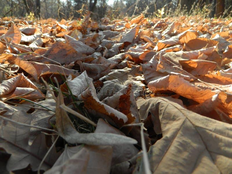 Feuilles tombées l'automne au sol image stock