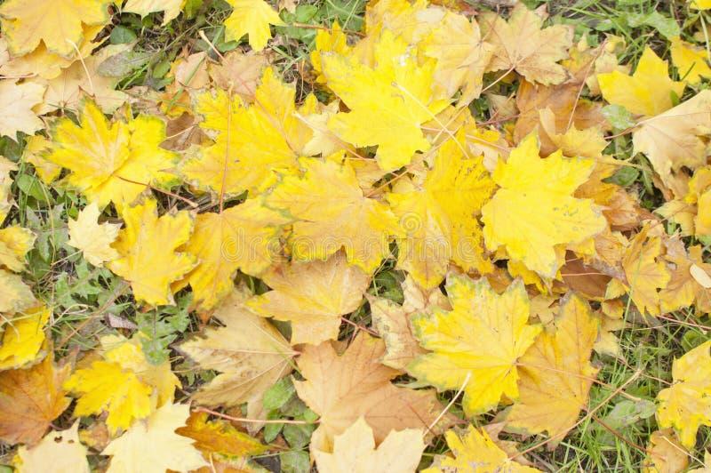 Feuilles tombées par automne sur l'herbe images stock
