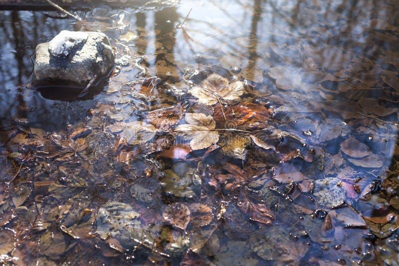 Feuilles tombées sur la surface d'un petit hiver de ressort image stock