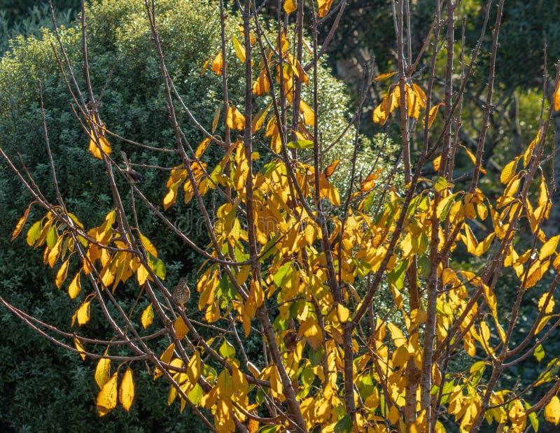 Feuilles tournant jaunes en automne photo libre de droits