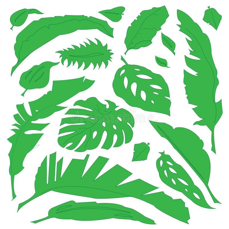 Feuilles tropicales de botanique verte photos stock