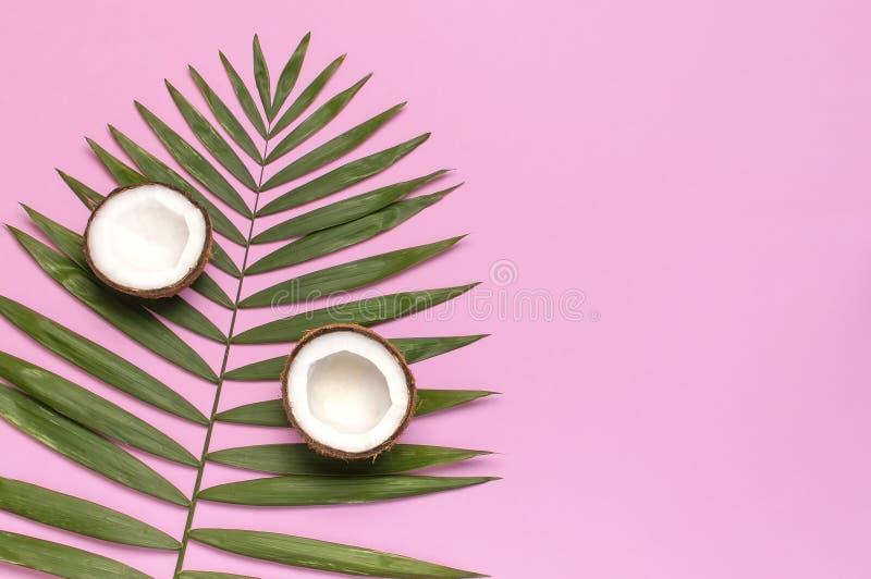 Feuilles tropicales et noix de coco fra?che sur le fond rose Configuration plate, vue sup?rieure, l'espace de copie Fond d'?t?, n images libres de droits