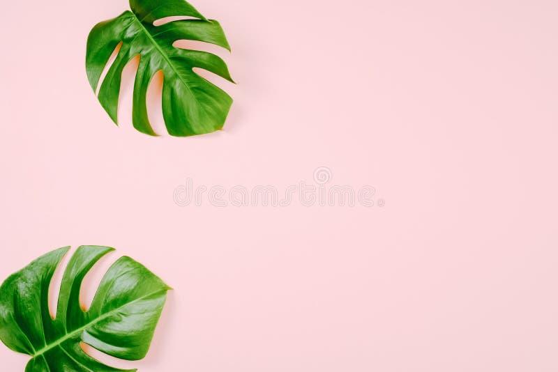 Feuilles tropicales Monstera sur le fond rose avec l'espace pour un texte Configuration plate, vue supérieure, couleurs en pastel photo libre de droits