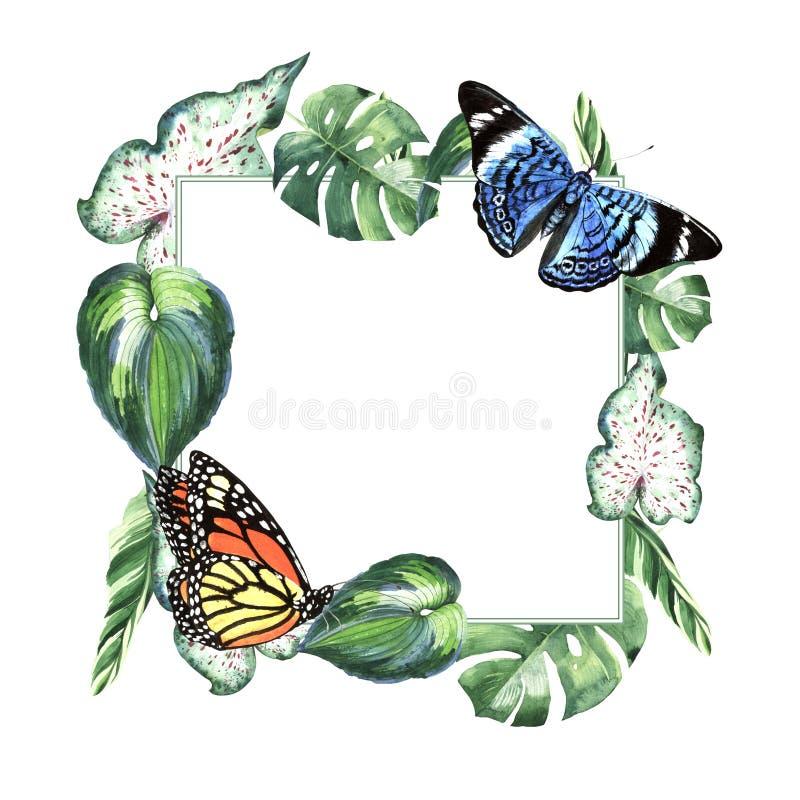 Feuilles tropicales palmier d'Hawaï et cadre de papillons dans un style d'aquarelle d'isolement illustration de vecteur