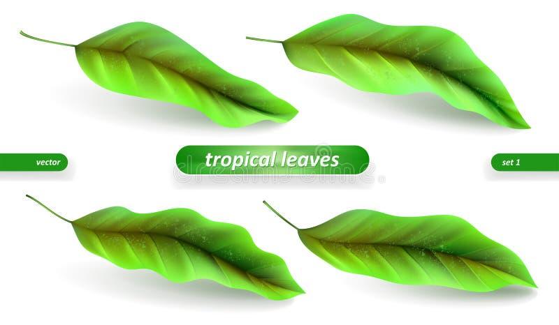 Feuilles tropicales réalistes, ensemble de feuille d'isolement sur le fond blanc Illustrations de vecteur, éléments floraux illustration de vecteur