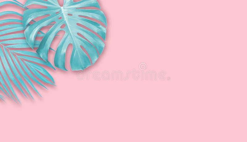 Feuilles tropicales sur le fond de papier rose avec la bannière minimale d'été de l'espace de copie photo libre de droits