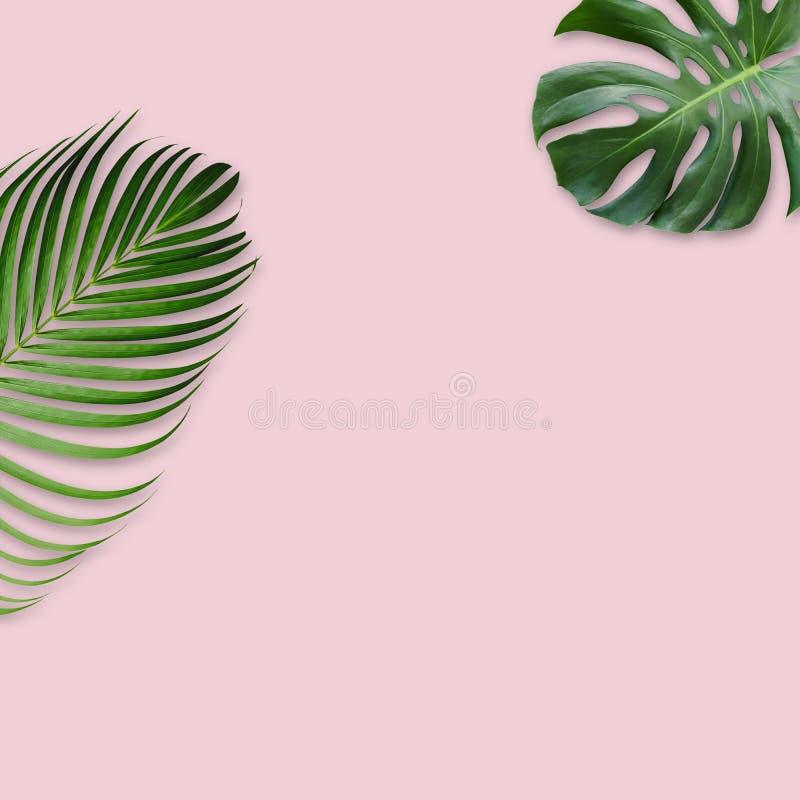 Feuilles tropicales vertes sur le fond rose avec l'espace de copie illustration de vecteur