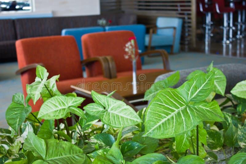 Feuilles vert clair d'une plante grimpante avec un contexte de tapisser photo libre de droits