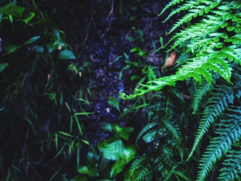 Feuilles vertes avec la couleur foncée du sol images libres de droits