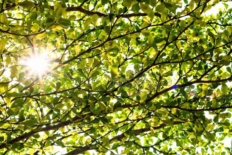 Feuilles vertes avec la lumière de rayon du soleil images stock