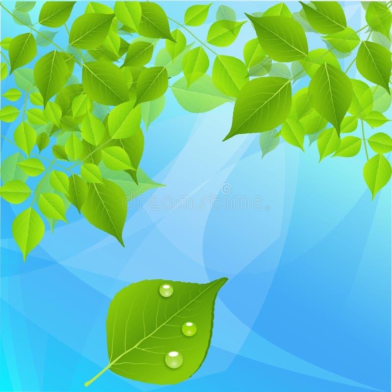 Feuilles vertes d'arbre sur un fond bleu images stock
