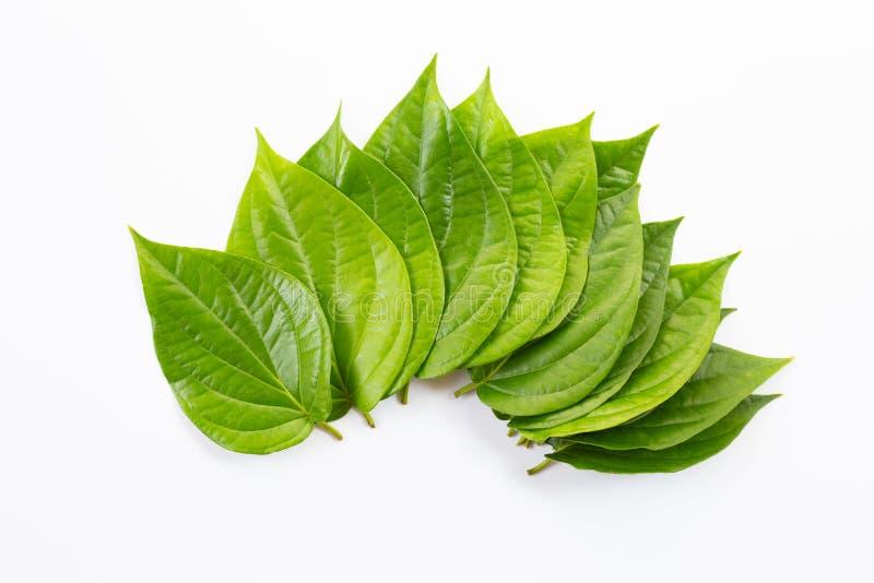 Feuilles vertes de bétel, betle frais de joueur de pipeau sur le blanc image libre de droits