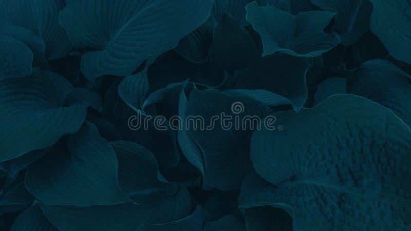 Feuilles vertes de cadet bleu Fond d'image pour les pages de débarquement image stock