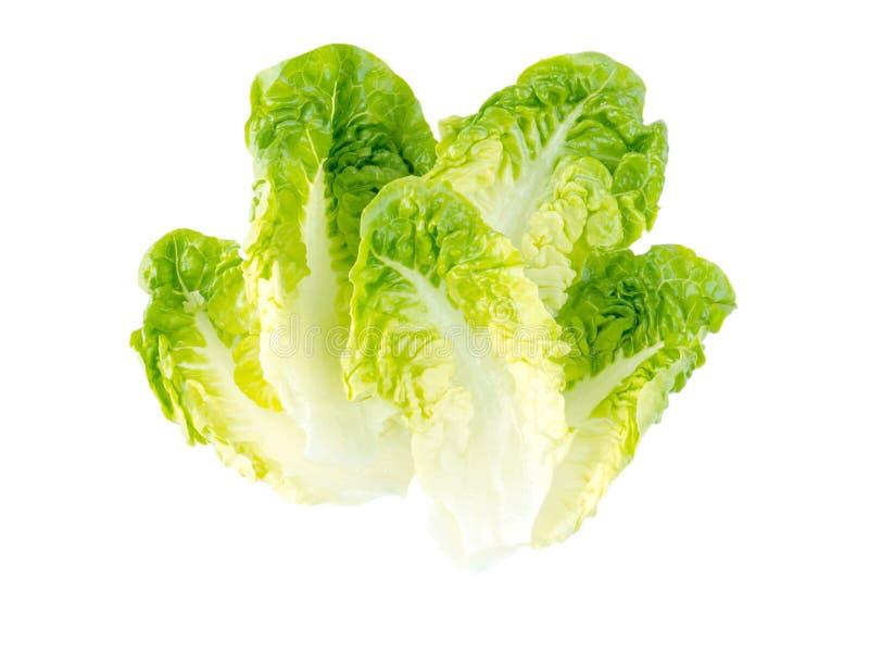 Feuilles vertes de salade de laitue images libres de droits