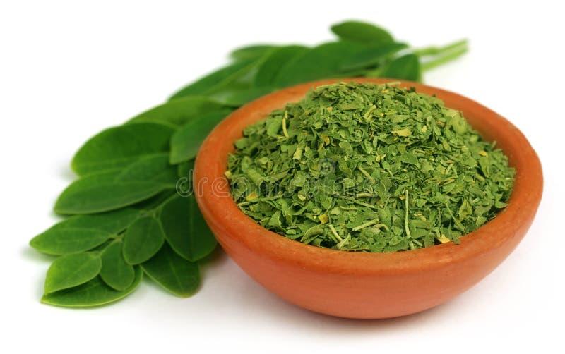 Feuilles vertes et dired de moringa photos stock