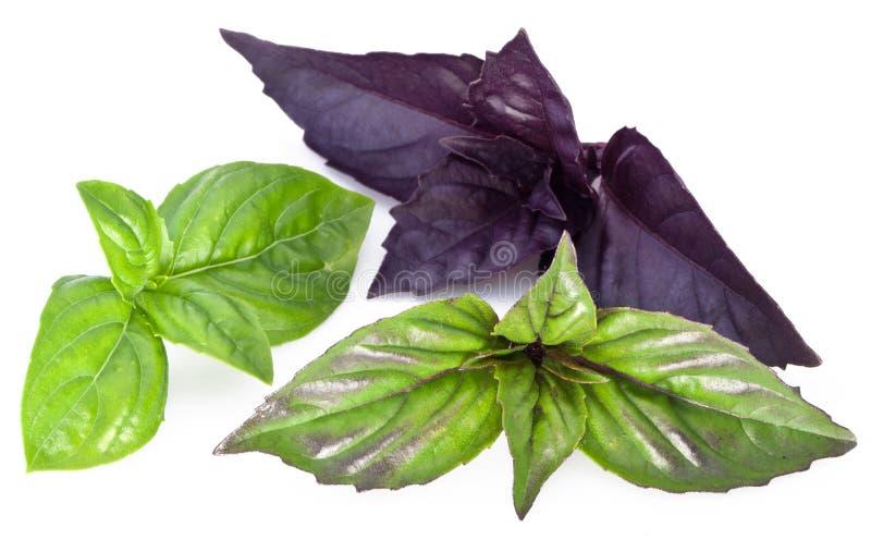 Feuilles vertes et violettes de basilic d'isolement sur un blanc photo stock