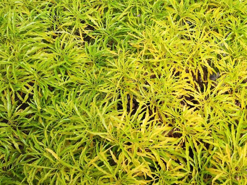Feuilles vertes jaunes dans le jardin images stock