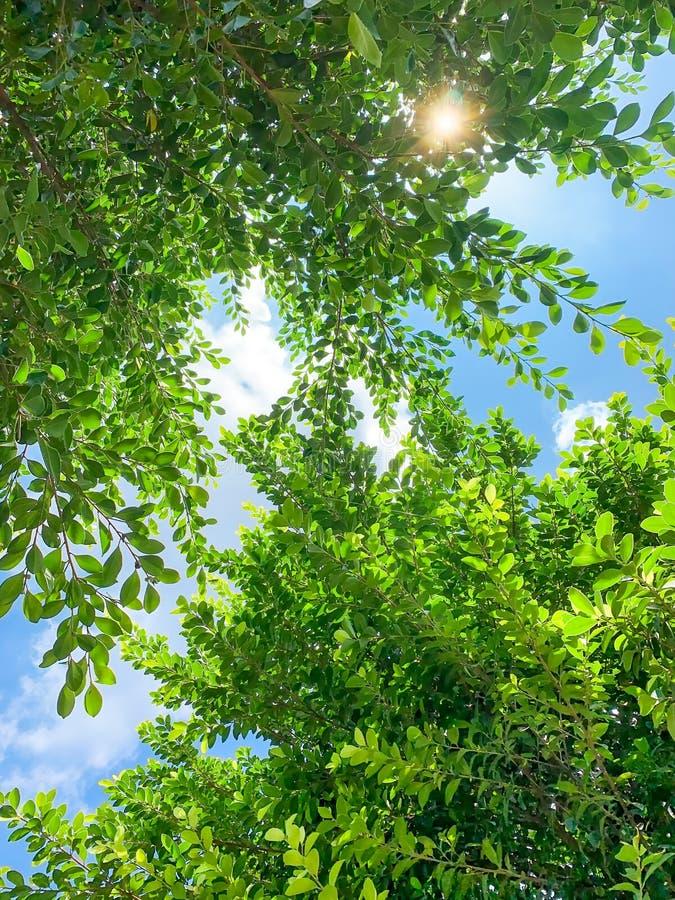 Feuilles vertes sous le soleil photo stock