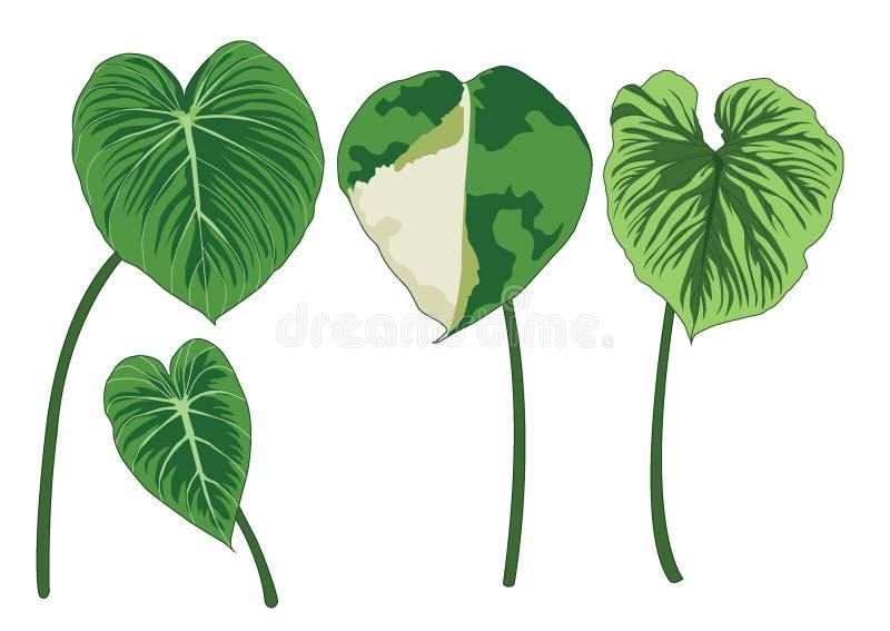 Feuilles vertes sur l'illustration blanche de fond illustration de vecteur