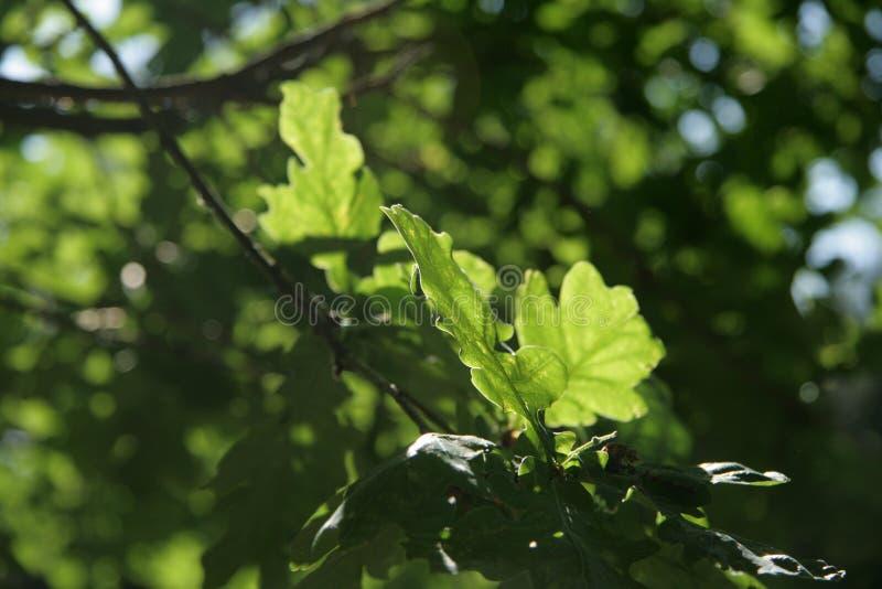 Feuilles vertes sur le Threes photographie stock