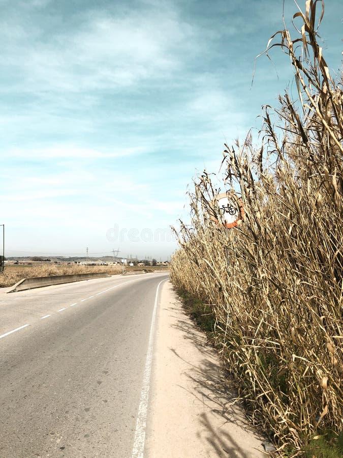 Feux de signalisation d'un vélo dans un champ de maïs un temps clair photo stock