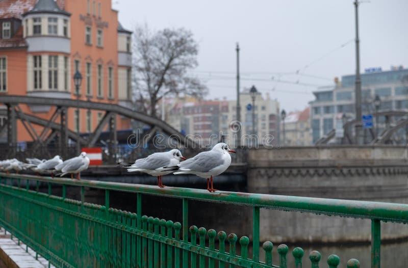 A few birds sit on bridge railings. Tumski bridge. Wroclaw. Poland stock images