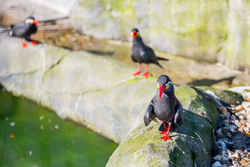 Few birds in zoo. Walking together stock photos