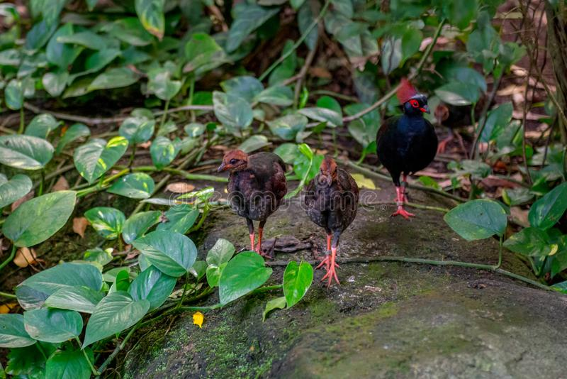 Few birds in zoo jungle. Walking together stock image