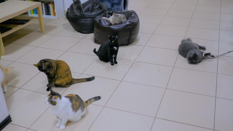 Few cats waiting meal time. Together at modern cat cafe stock photo