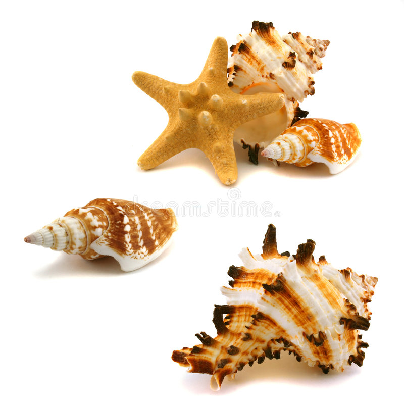 A few cockleshells and starfish stock photography