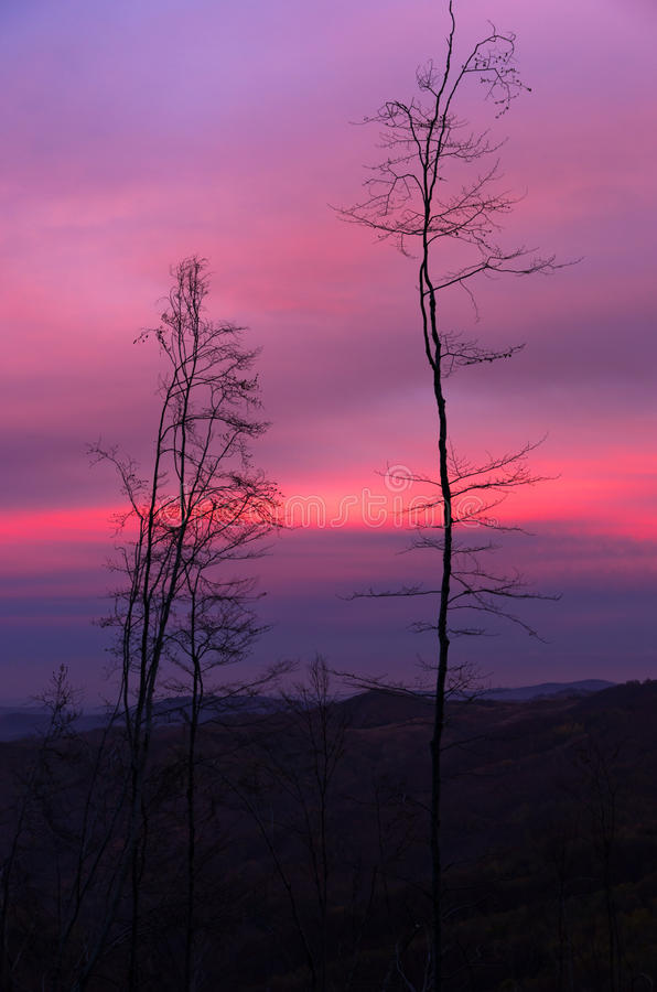 A few dead trees in mountain forest against beautiful sky at twilight royalty free stock image
