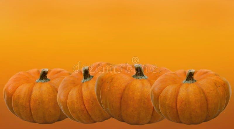 Pumpkins  for halloween on orange backgound. Few decorative pumpkins  in line   for halloween on orange backgound stock image