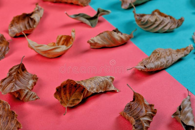 Dry leaves on a two-color background royalty free stock photos
