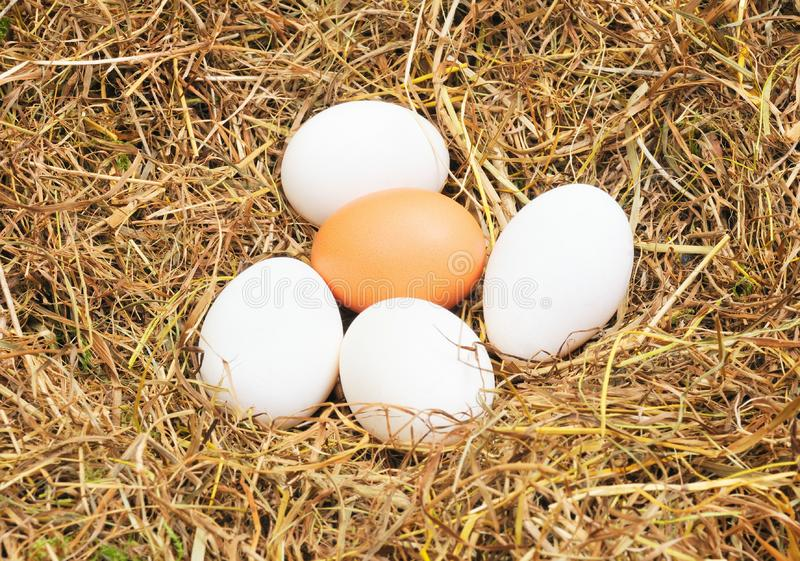 Download Few eggs stock image. Image of home, group, golden, culture - 7828051