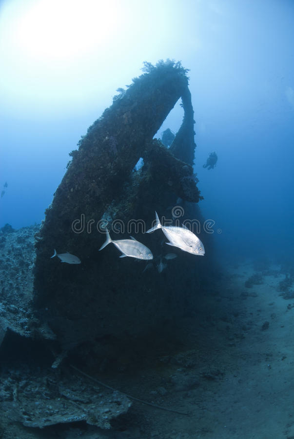 Few Jackfish passing by the stern of a shipwreck. royalty free stock photos