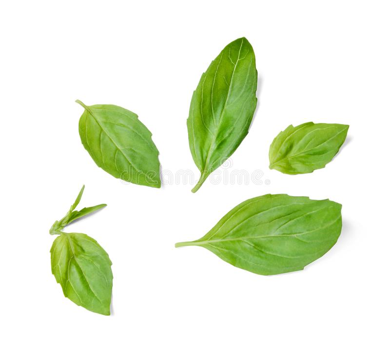 A few leaves of fresh fragrant basil. White isolated background. Top view. stock photos