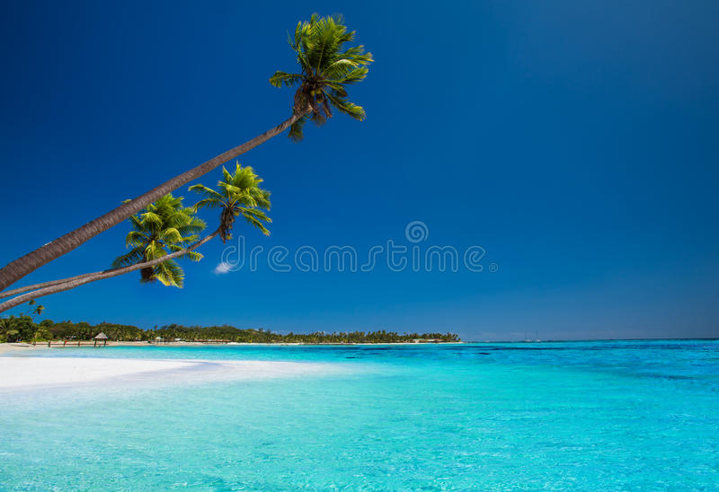 Download Few Palms On Deserted Beach Of Tropical Island Stock Image - Image: 31761455