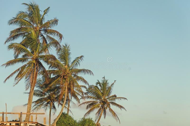A few palms royalty free stock photo