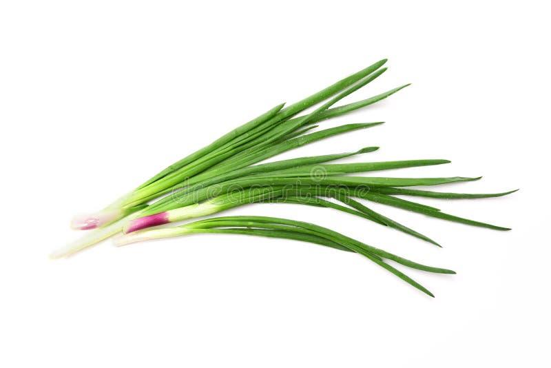 Few zielone cebule odizolowywać na białym tle zdjęcia stock